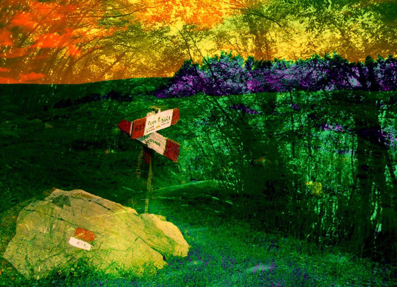 bivio-nel-bosco-fotografia-rielaborata-in-digitale-1-1170x845