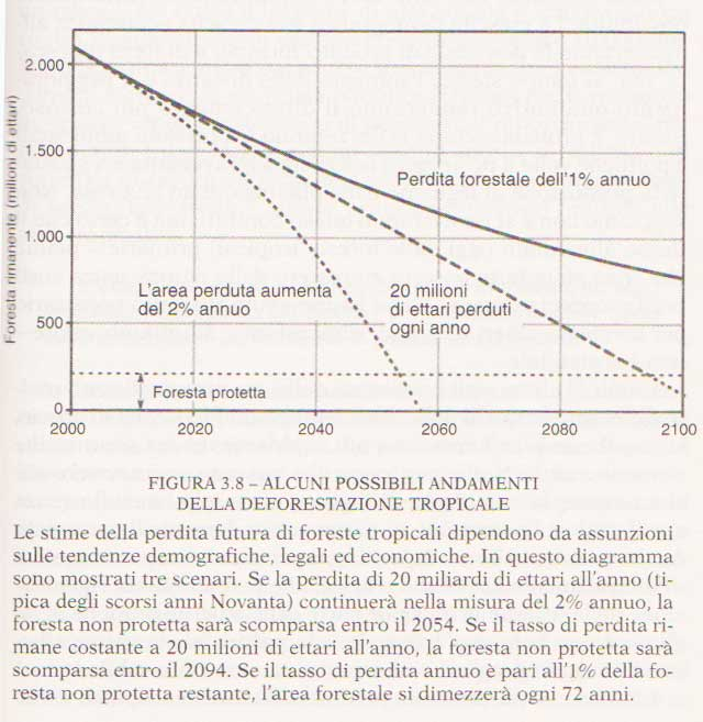 grafico-scenari-di-deforestazione-tratto-dal-libro-I-nuovi-limiti-dello-sviluppo